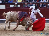 Lire la suite : Madrid (17/05/2018) : Oreille d'un grand Juan Pedro pour Luis David...